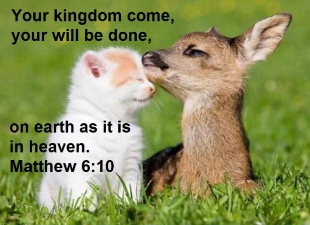 Matthew 6-10