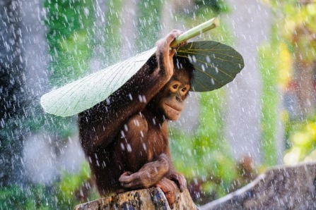 rain-monkey-cute-animal-photography-KB795-living-room-home-wall-modern-art-decor-wood-frame-fabric.jpg_640x640
